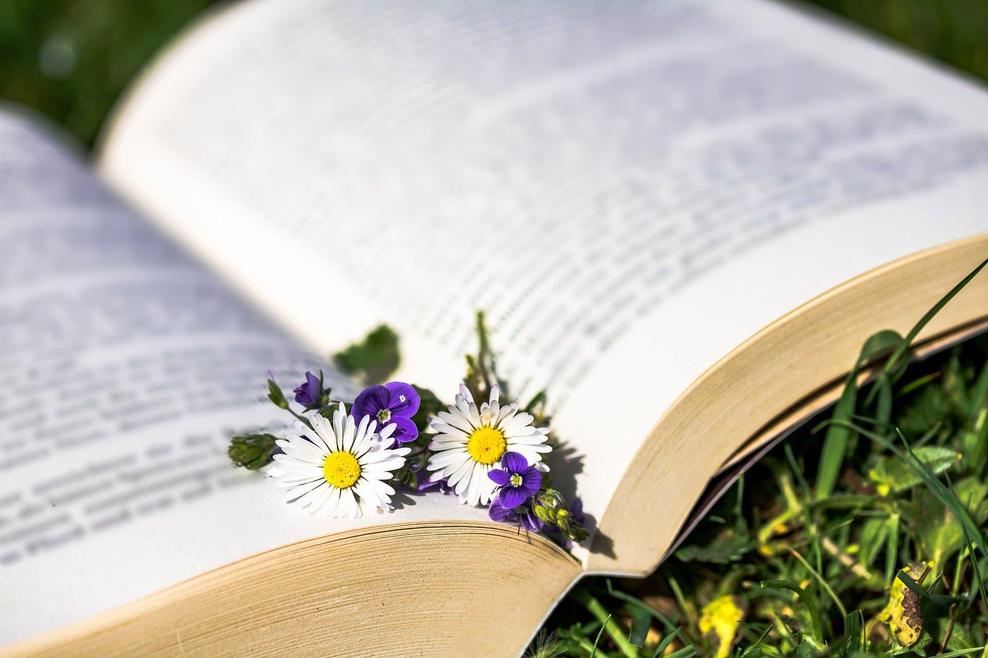 Buch Blumen Pause Coaching